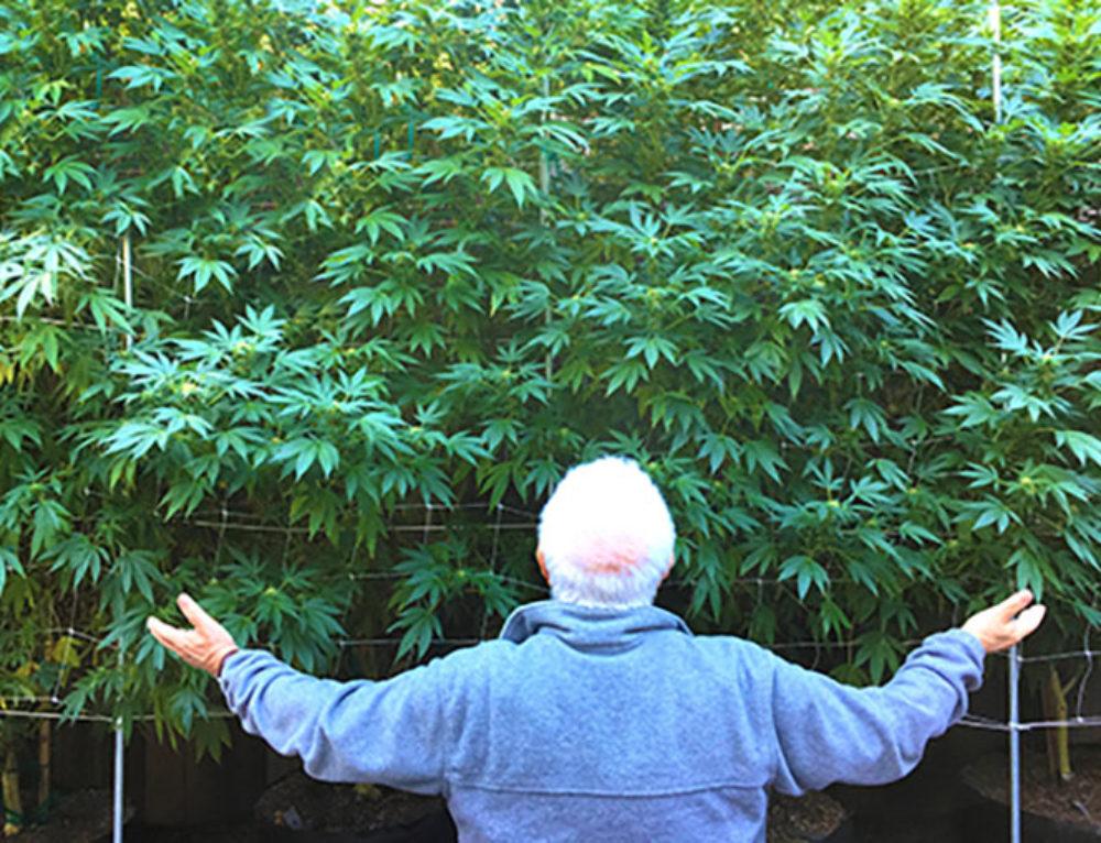 15 Health Benefits of Medical Marijuana