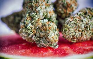 Watermelon Terpenes Bud