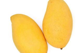 Mangoes Make You More Responsive to Cannabis