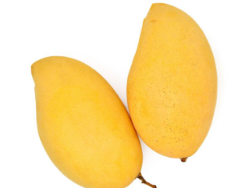 Why Mangoes Make You More Responsive to Cannabis