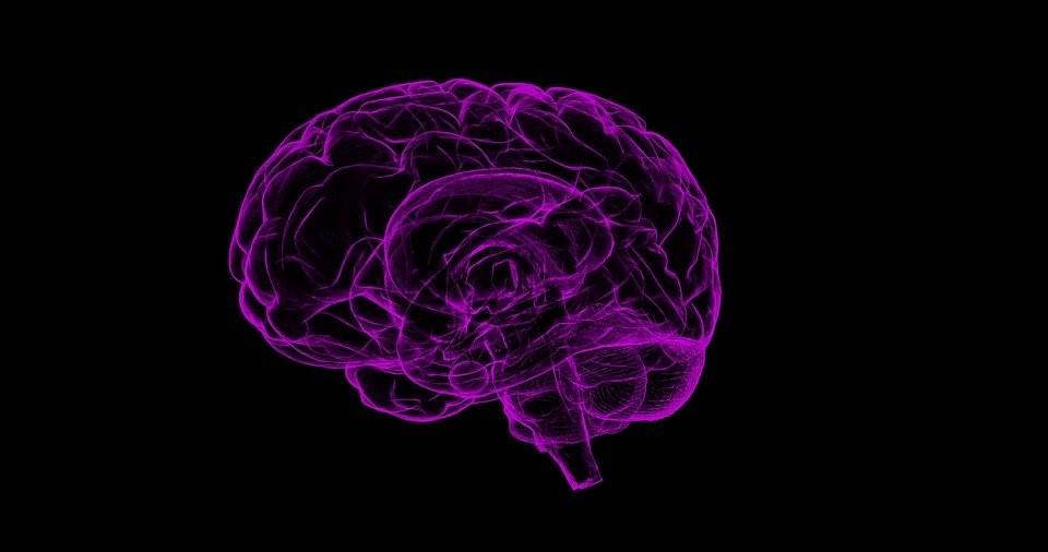An illustration of a healthy human brain.