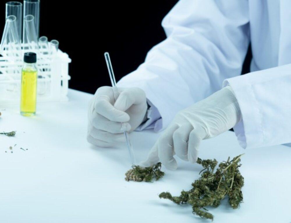 Are Medical Marijuana Gummies A Good Choice?