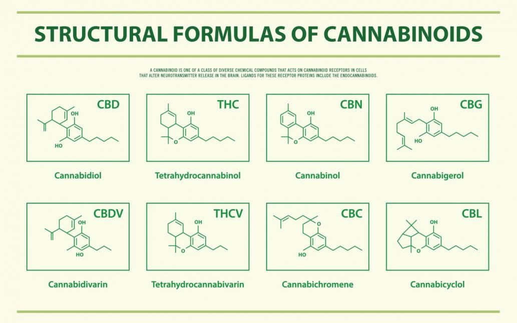 An infographic about chemical structures of cannabinoids