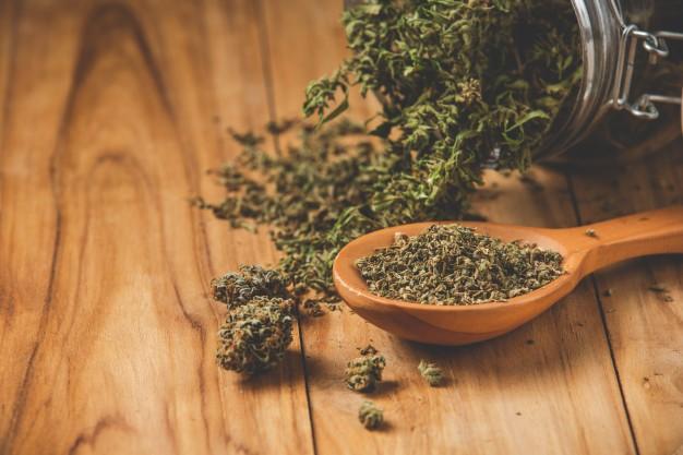 a tabletop with medical marijuana buds